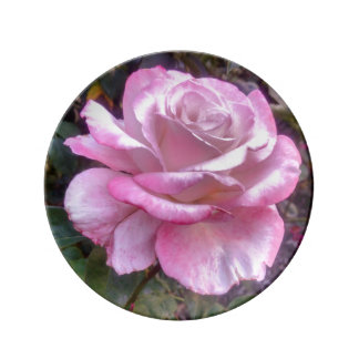 Single pink rose on a plate porcelain plate