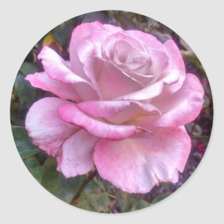 Single pink rose on a sticker