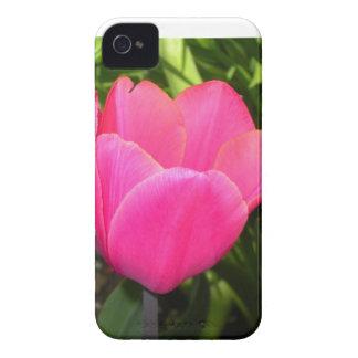 Single Pink Tulip Blackberry Cases