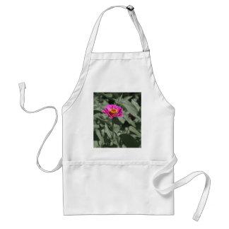 Single pink zinnia flower standard apron