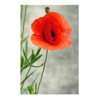 Single poppy flower photo 14 cm x 21.5 cm flyer