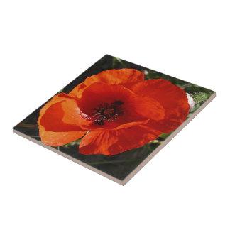 Single Poppy Tile