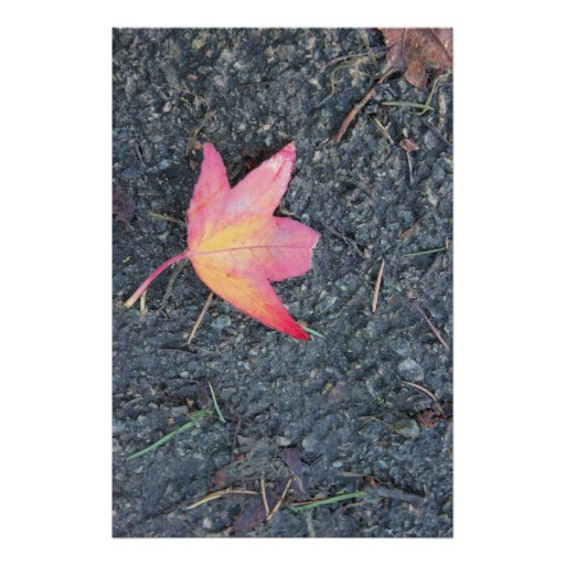 Single Red and Yellow Maple Leaf in autumn Print