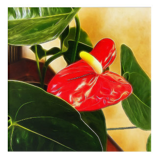 Single Red Anthurium Flower Acrylic Wall Art