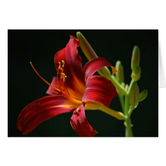 Single Red Daylily Note Card