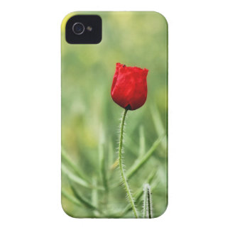 Single Red Poppy iPhone 4 Case-Mate Cases