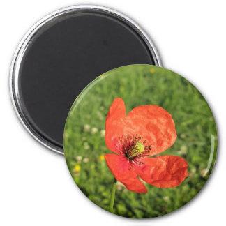 Single Red Poppy in Garden Refrigerator Magnets