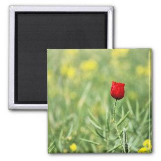 Single Red Poppy Fridge Magnets