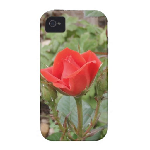 Single Red Rose Vibe iPhone 4 Covers