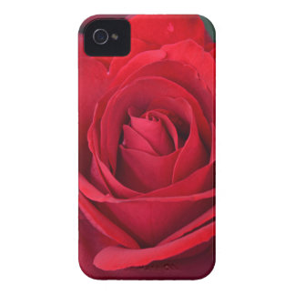 Single red rose in full bloom iPhone 4 cases