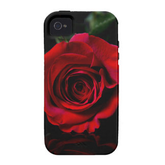 Single Red Rose Iphone case iPhone 4/4S Covers
