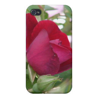 Single Red Rose iPhone Case iPhone 4 Case
