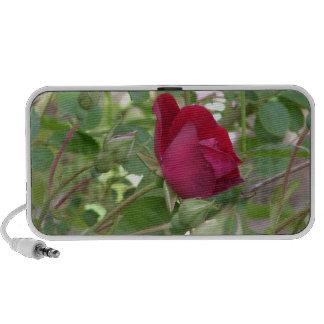 Single Red Rose Speaker