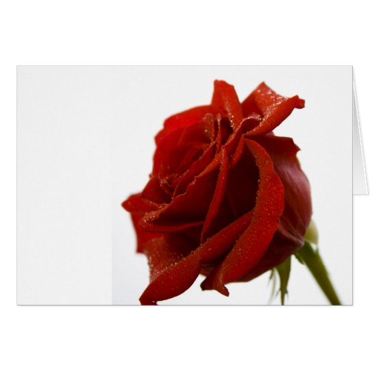 Single Red Rose With Dew Drops Card
