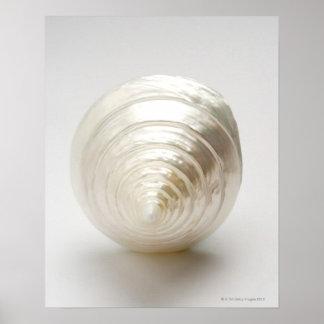 Single spiral seashell poster