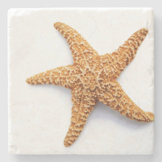 Single Sugar Starfish Stone Coaster