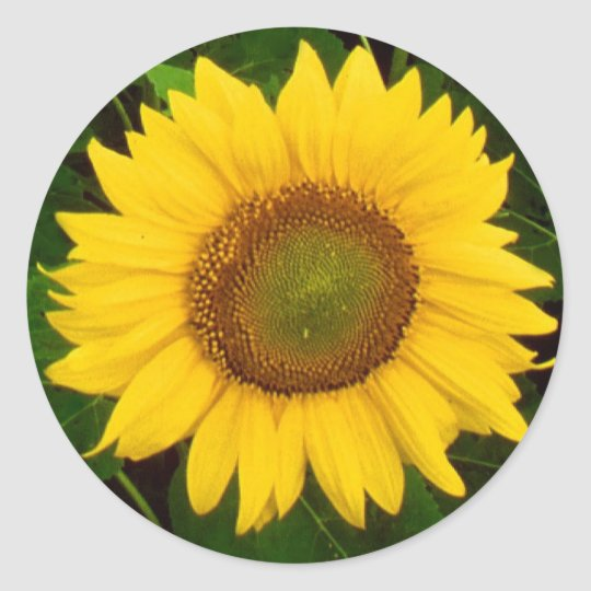 Single Sunflower Green Leaves Yellow Flower Classic Round