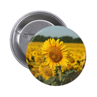 Single Sunflower in a Field of Sunflowers 6 Cm Round Badge