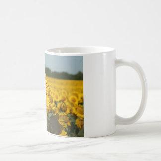 Single Sunflower in a Field of Sunflowers Mugs