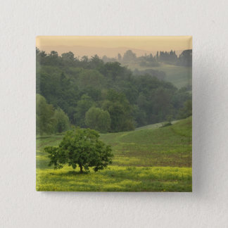 Single tree in agricultural farm field, Tuscany, 15 Cm Square Badge