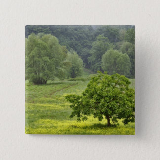Single tree in agricultural farm field, Tuscany, 2 15 Cm Square Badge