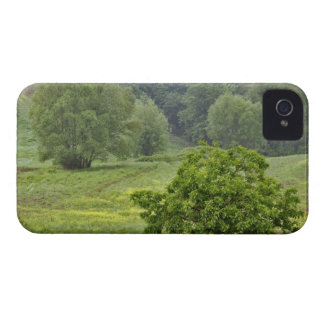 Single tree in agricultural farm field, Tuscany, 2 iPhone 4 Case-Mate Case
