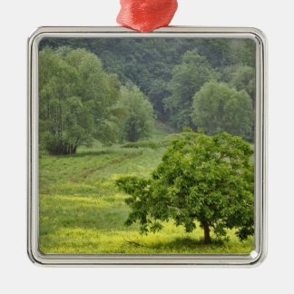 Single tree in agricultural farm field, Tuscany, 2 Christmas Ornament