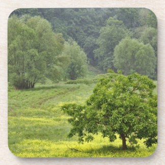 Single tree in agricultural farm field, Tuscany, 2 Coaster