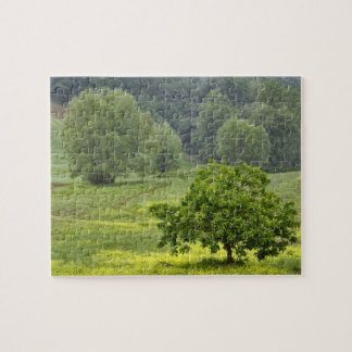 Single tree in agricultural farm field, Tuscany, 2 Jigsaw Puzzle