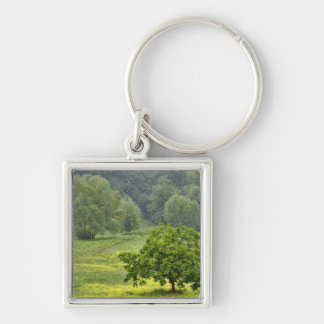 Single tree in agricultural farm field, Tuscany, 2 Key Ring