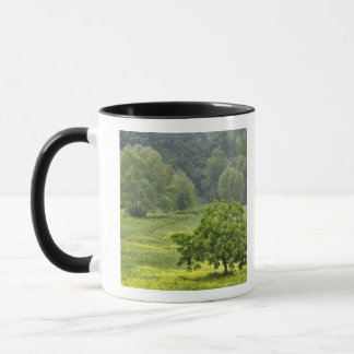 Single tree in agricultural farm field, Tuscany, 2 Mug