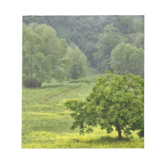 Single tree in agricultural farm field, Tuscany, 2 Notepad