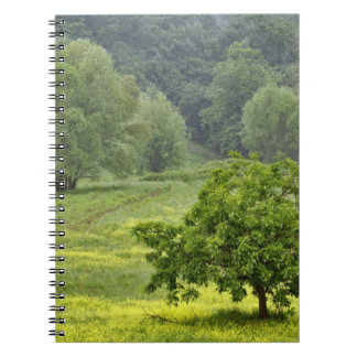 Single tree in agricultural farm field, Tuscany, 2 Spiral Notebook