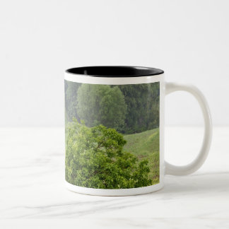 Single tree in agricultural farm field, Tuscany, 2 Two-Tone Coffee Mug