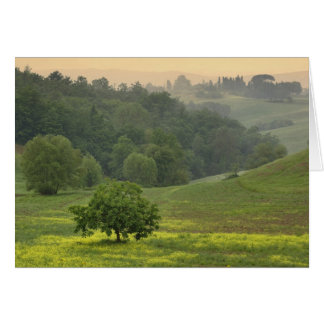 Single tree in agricultural farm field, Tuscany, Card