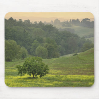 Single tree in agricultural farm field, Tuscany, Mouse Mat
