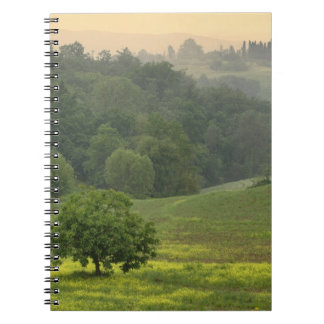 Single tree in agricultural farm field, Tuscany, Notebook