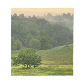 Single tree in agricultural farm field, Tuscany, Notepad
