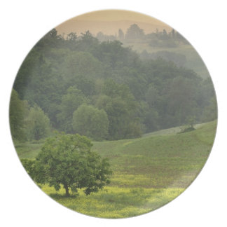 Single tree in agricultural farm field, Tuscany, Plate