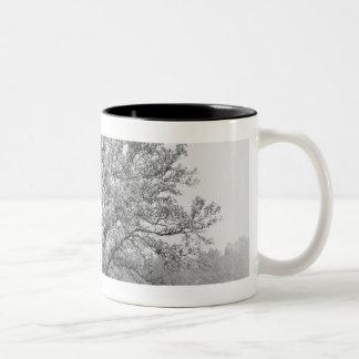 Single tree in field B&W Two-Tone Coffee Mug