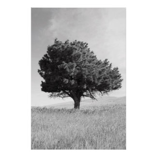 Single Tree Poster,Print Poster
