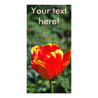 Single tulip personalized photo card