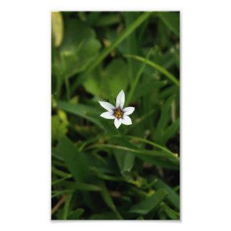 Single White Bloom Wildflower Macro Photo Print