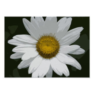 Single White Daisy Poster