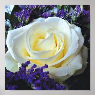 Single White Rose in Bloom Poster