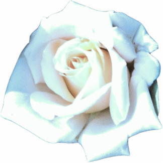Single White Rose Photo Cut Out