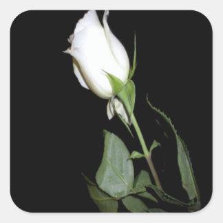 Single White Rose Square Sticker