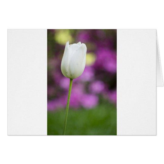 single white tulip card