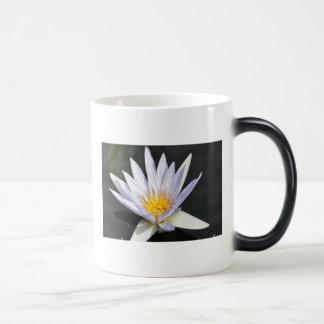 Single white water lily. morphing mug