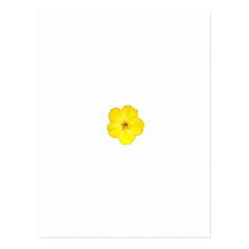 Single Yellow Four O'Clock Postcard
